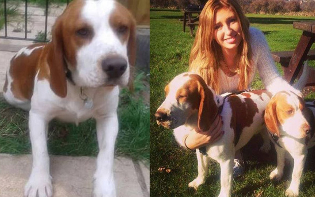 Este perro ha esperado sentado fuera de la casa de su humano el regreso de su hermano que probablemente ha sido secuestrado desde hace dos años