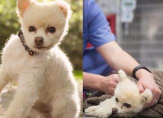 Este perro sufre daño cerebral debido a los terribles golpes que le propició su humano hasta dejarlo inconsciente
