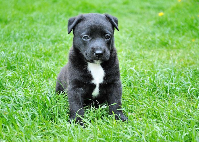 evitar que tu perro ladre