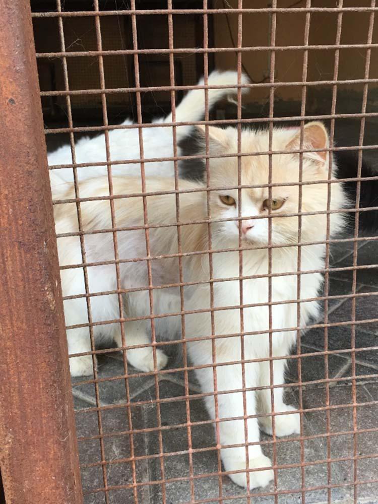 Gato encerrado en el zoo de Arabia Saudita