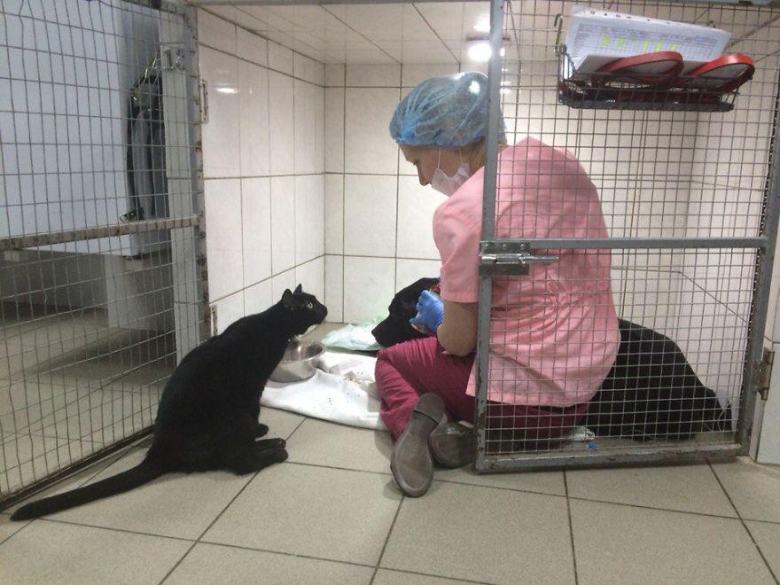Gato enfermo cuida a otros animales enfermos