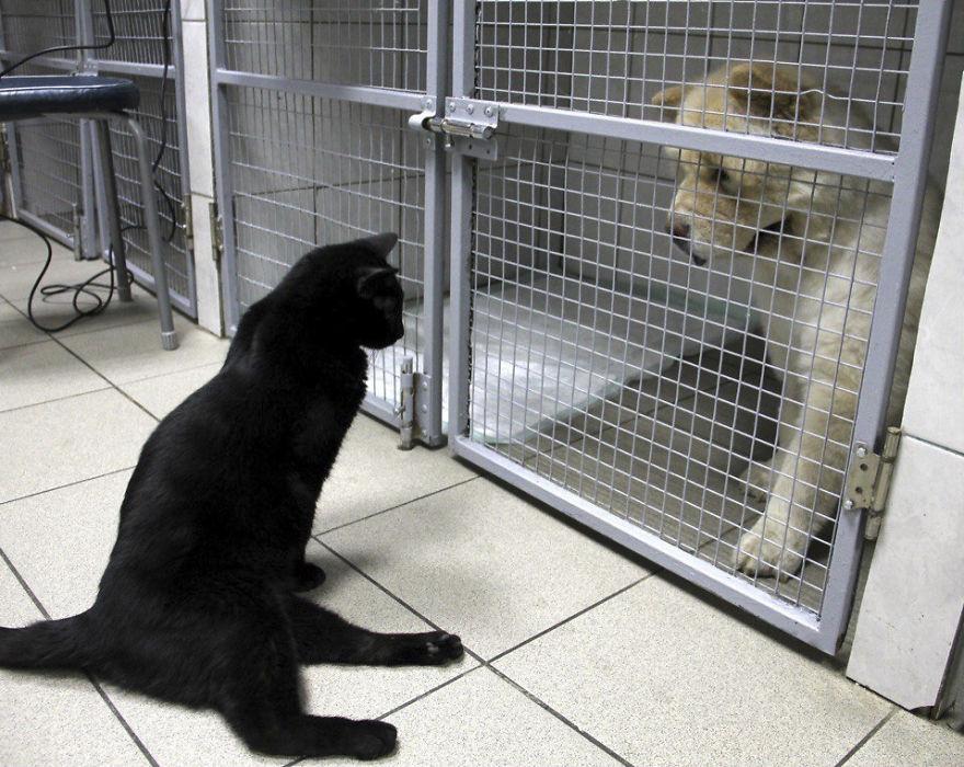 Gato paralítico brinda consuelo a otros animales