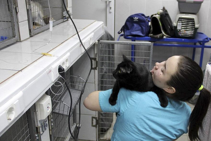 Gato paralítico es enfermero