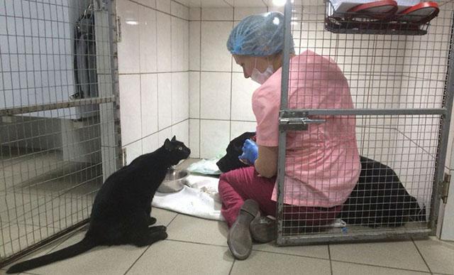 Gato rescatado no puede caminar es el enfermero de otros animales