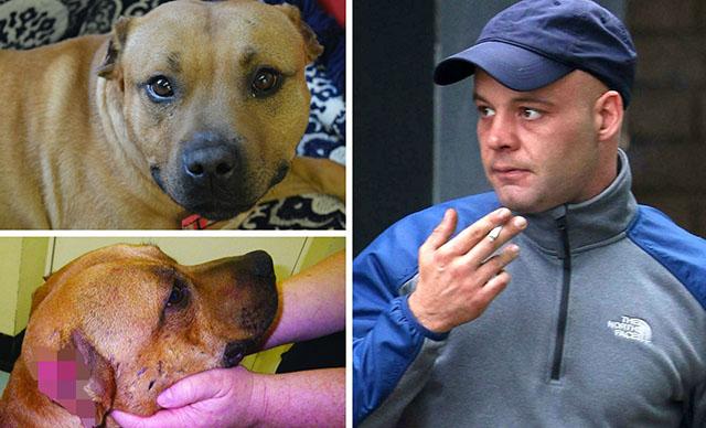 Hombre condenado por drogar a su perro con cocaina y arrancarle las orejas