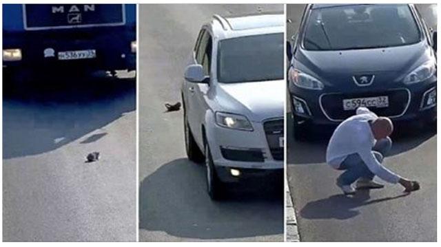 Hombre se desvió 2 kilómetros para salvar a un gatito herido en la carretera