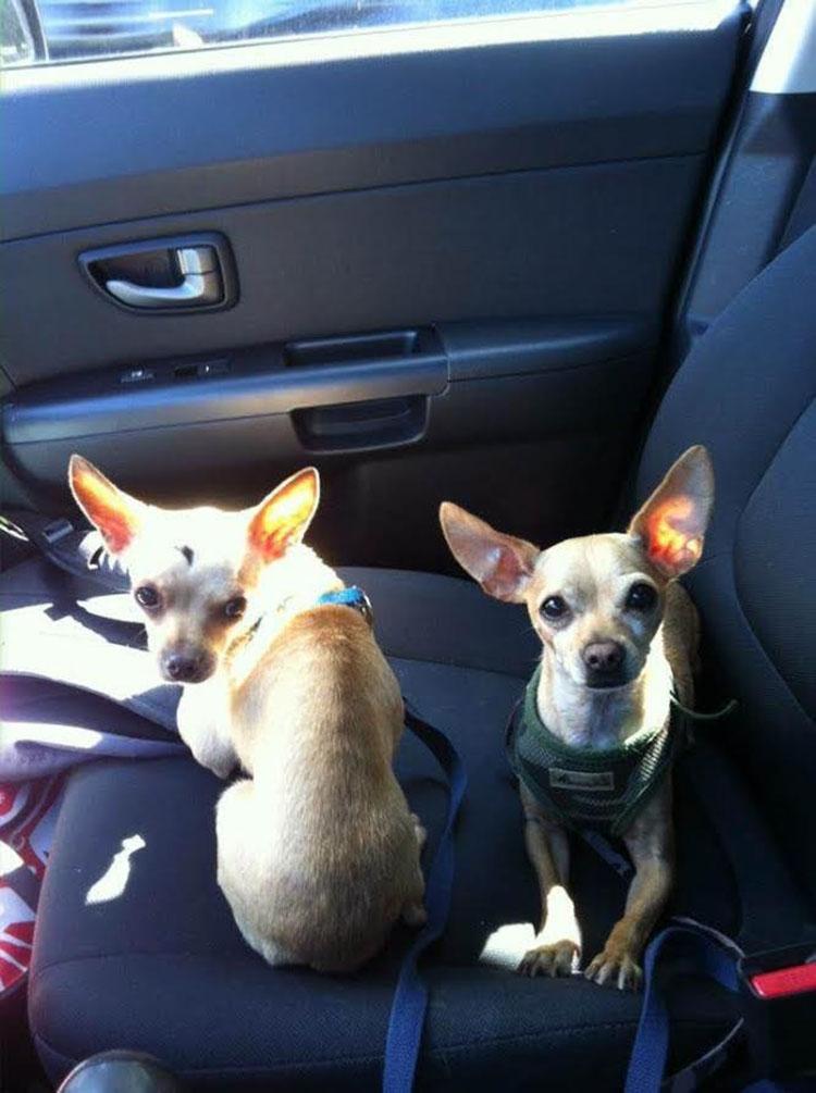 Lola y Chip