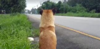 Muere el perro esperando a su familia en el lugar donde lo abandonaron