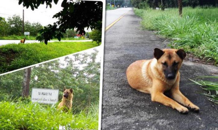 Muere el perro esperando a su familia
