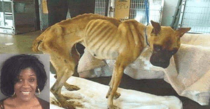 Mujer dejó morir de hambre a su perro pero fue liberada