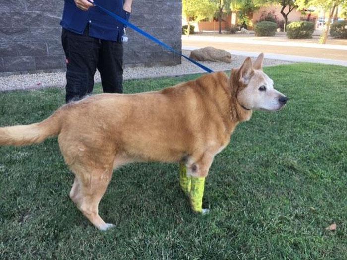 Mujer detenida luego de cortar las patas a su perro