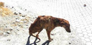 Mujer encuentra a un perro tirado en la carretera y lo lleva a casa
