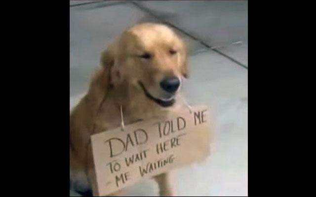 Nadie quiso a este perro mientras estaba en el refugio