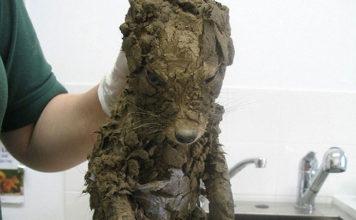 Nadie sabía que animal misterioso era hasta que lo limpiaron