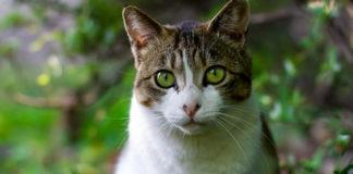 Nombres para gato macho muy originales