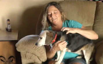 Pareja rescató a un perro en el río
