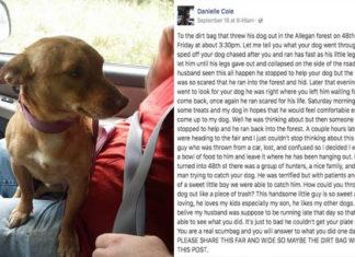 Pareja rescató a un perro en la carretera y escribe un gran mensaje en facebook dirigido a quien lo abandono