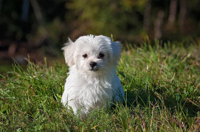 Perrito, evitar que tu perro ladre