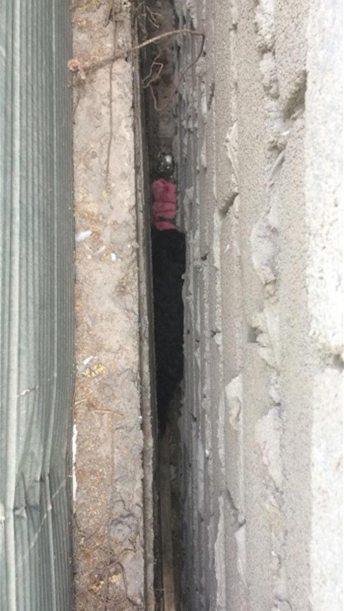 Perro atrapado en medio de dos paredes