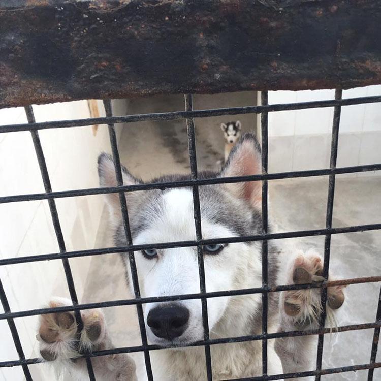 Perro en el zoólogico de Arabia