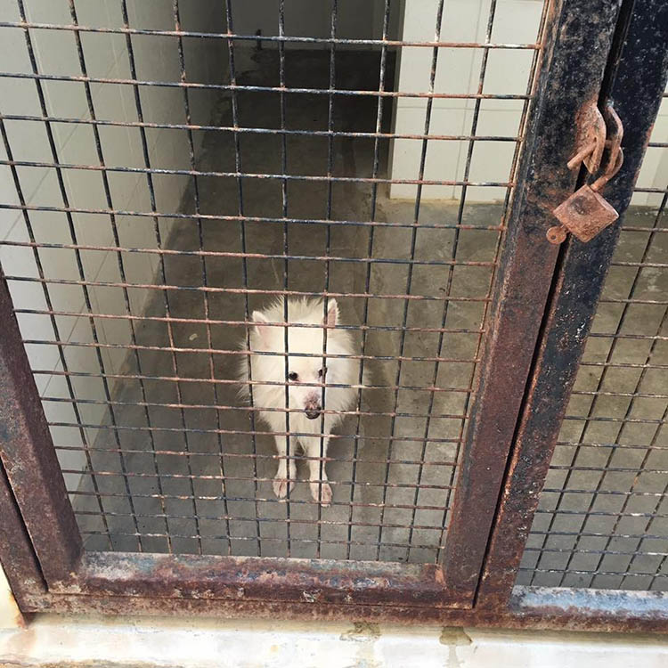 Perro en zoo de Arabia Saudita