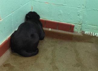 Perro estaba congelado del miedo al ser abandonado en un refugio