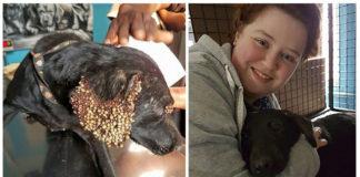 Perro infestado de garrapatas fue rescatado