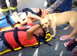 Perro no se separó de su humano que sufrió un accidente