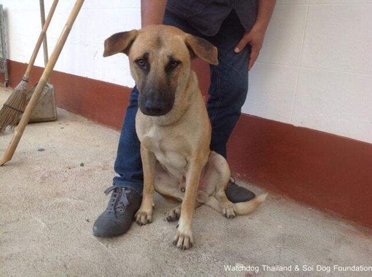 Perro rescatado del comercio de carne de perro