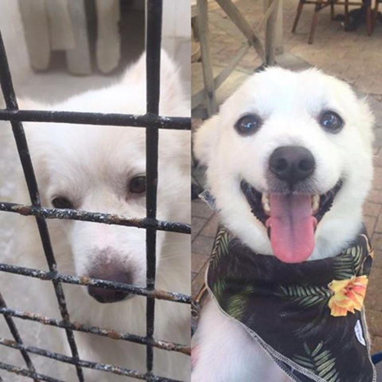 Perro rescatado
