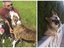 Perros van a ser sacrificados y uno escapo del refugio