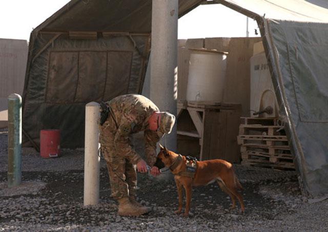 Presidente de Estados Unidos firma ley para que los perros militares vuelvan a casa cuando se retiren