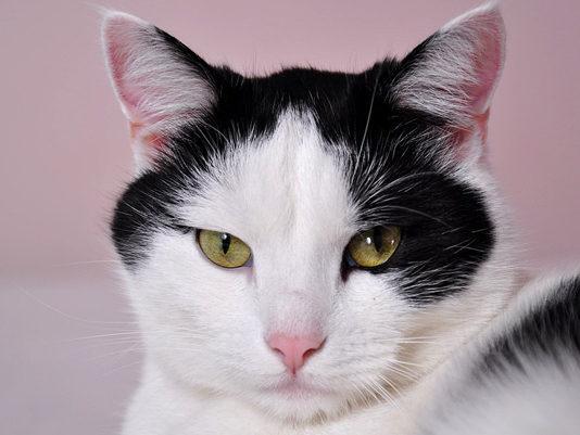 Si buscas nombres para gato hembra, ingresa aquí