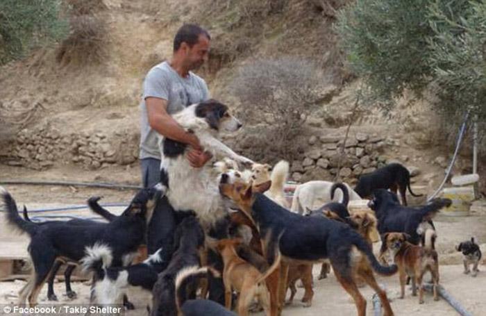 takis y sus perros rescatados