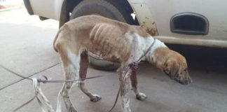 Tres niños en edad escolar violaron a un perro y son acusados de crueldad animal