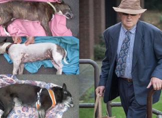 """Tres perros murieron """"cocinados vivos"""" en un auto mientras su humano estaba en el gimnasio, el hombre deberá afrontar una condena"""