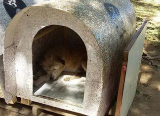 Voluntarios construyen casas para perros abandonados en Brasil