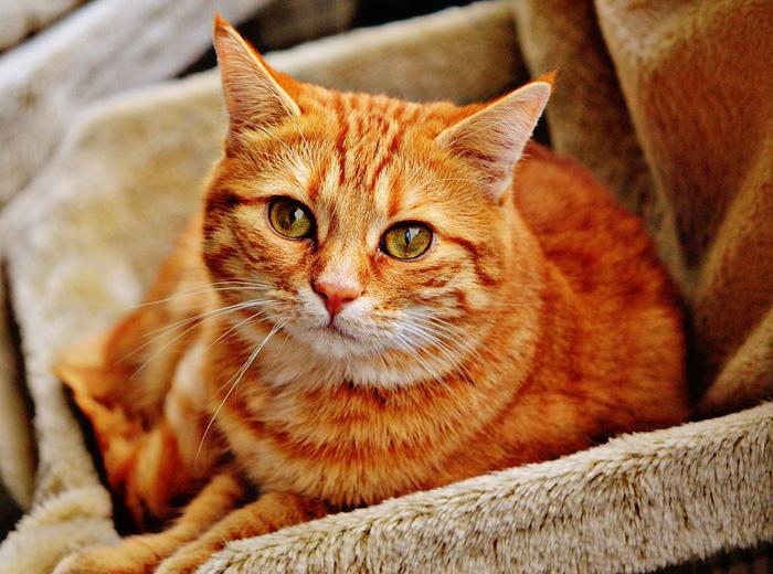 cómo llamar a tu gata