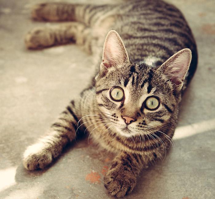 Consulta con el veterinario antes de cambiar el alimento a tu mascota