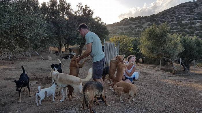 hombre rescata perros