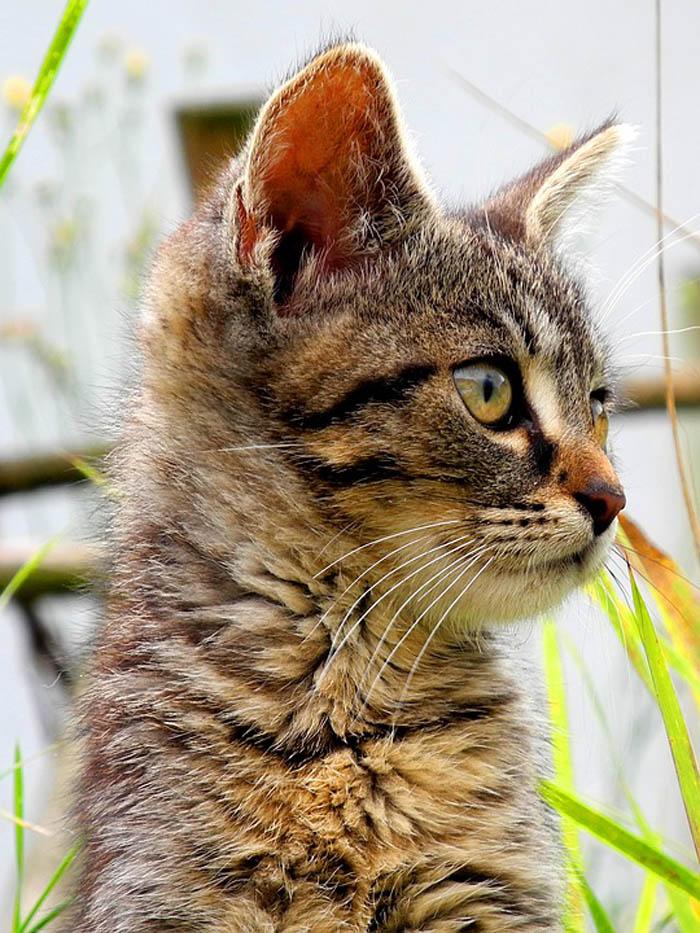 nombres para gato hembra muy originales
