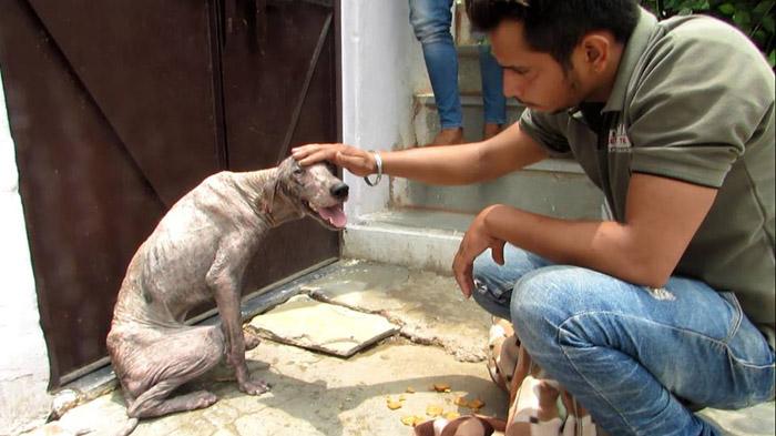 perro con sarna