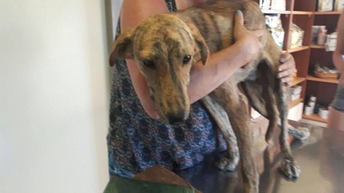 perro rescatado con columna rota