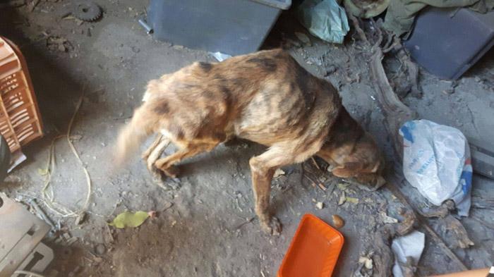 perro vivía en un granero