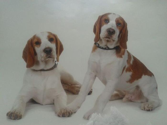 perros hermanos