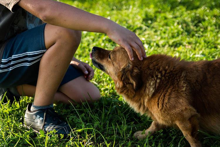Los perros suelen lamer como demostración de cariño