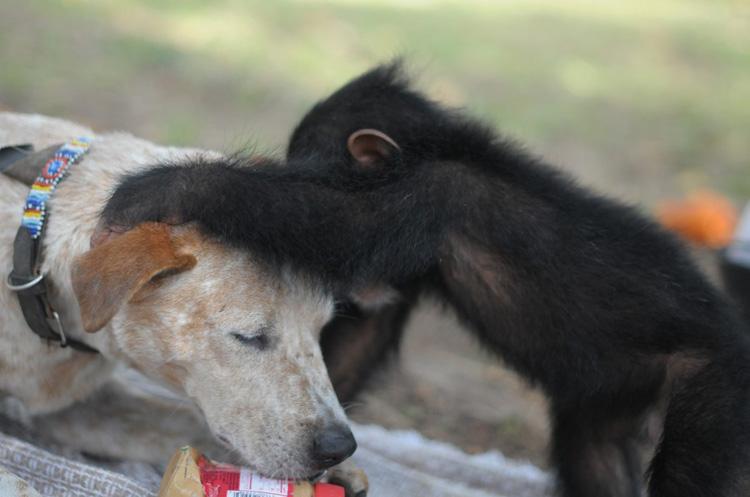 princess y chimpancé
