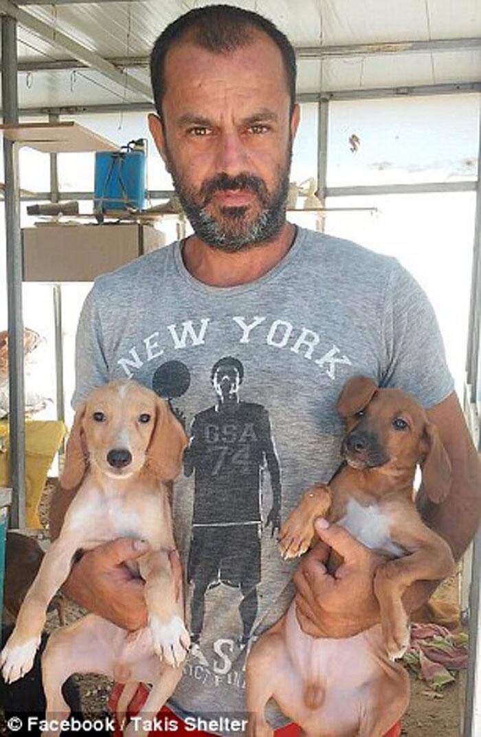 rescata perros abandonados