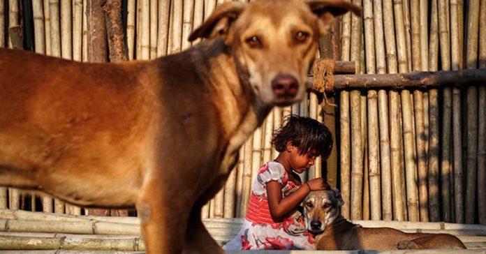 Asesinos de perros serán recompezandos en la India con monedas de oro