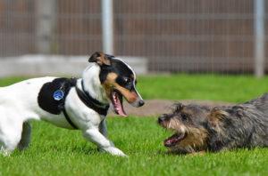 No emplees golpes para separar una pelea de perros